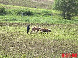 Сельскохозяйственные работы в КНДР