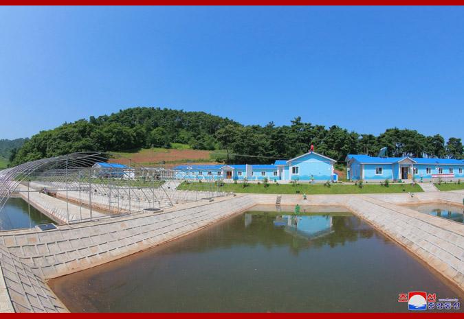Ким Чен Ын в рыбоводческом хозяйстве 1