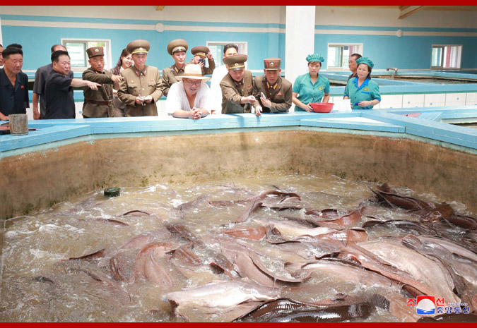 Ким Чен Ын на Самчхонской сомоводческой ферме 3